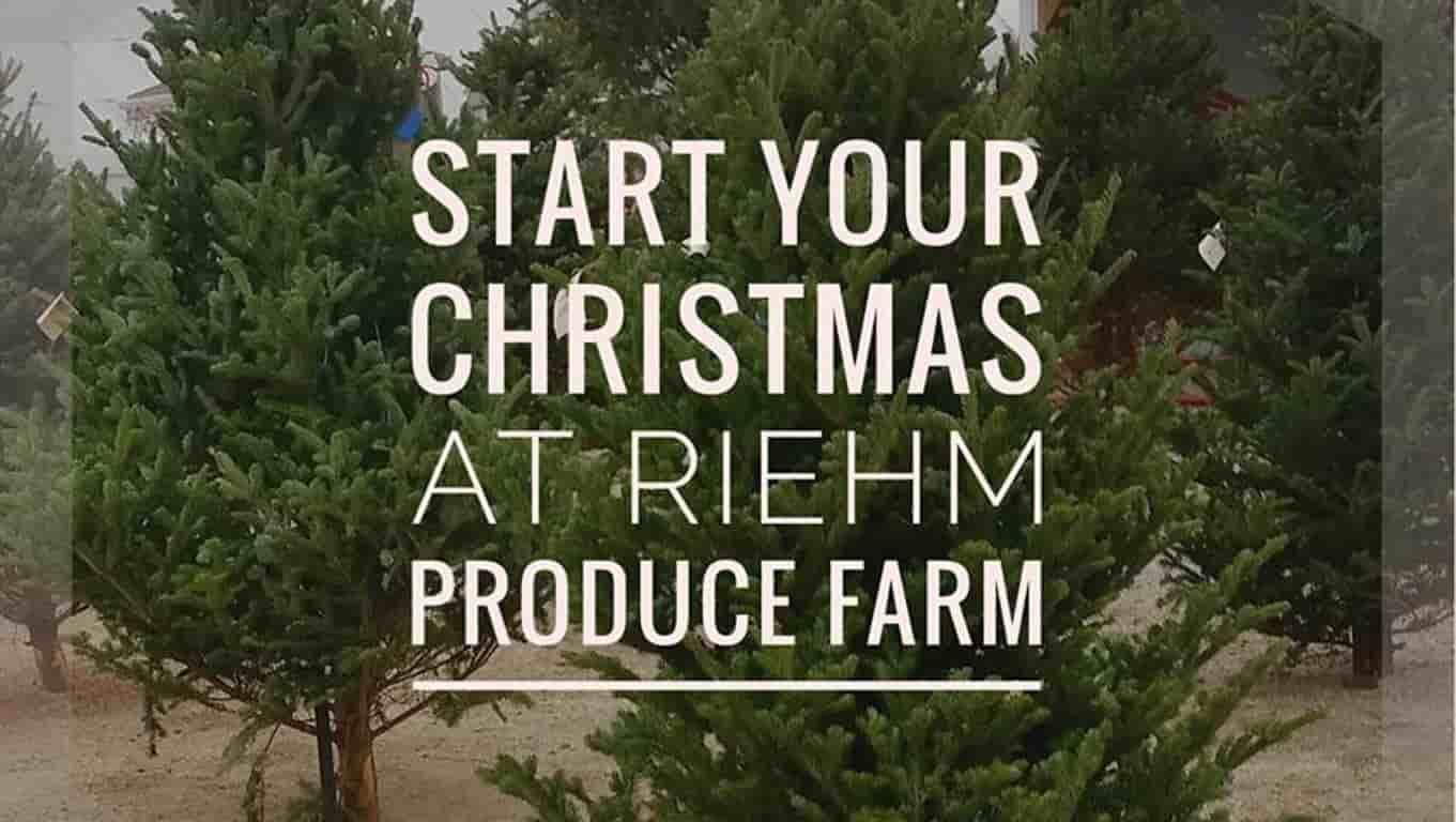 christmas trees family fun - Starting A Christmas Tree Farm